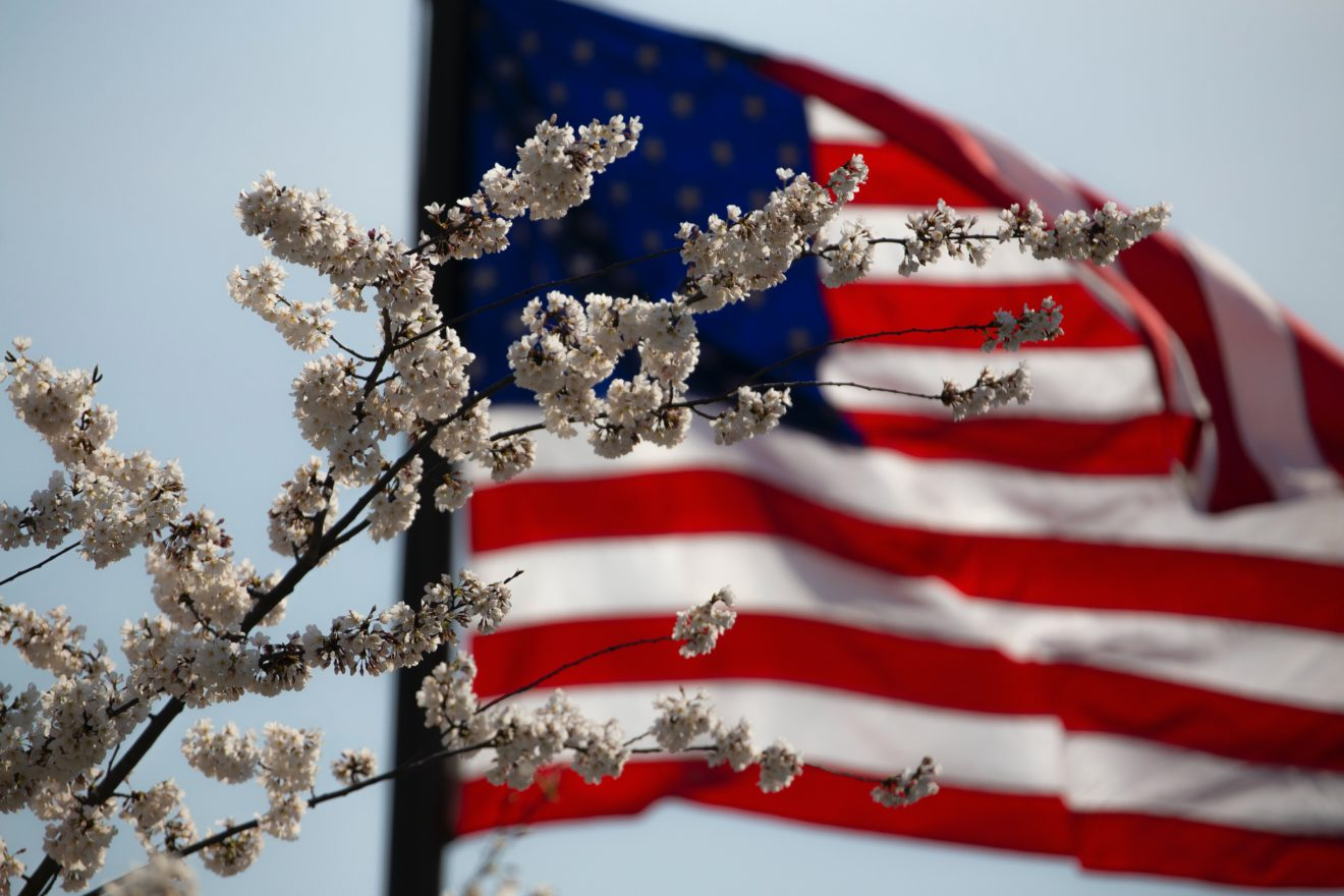 American Flag behind a white flowering tree